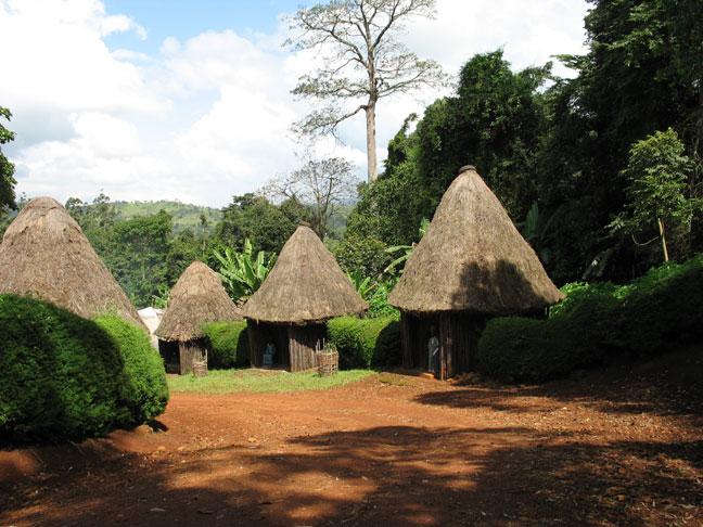 plateau ouest camerounais